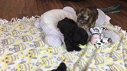 Sweet pea's pups - 7 weeks old
