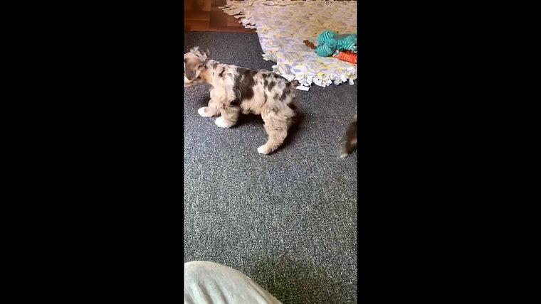 Fudge & Bruno's pups