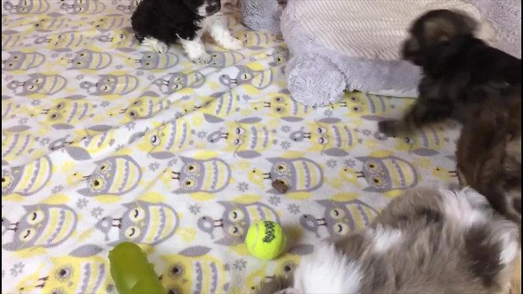 Riley's Pups