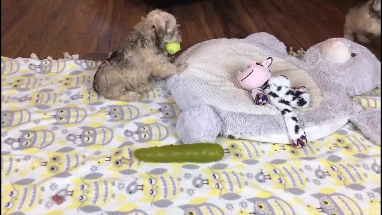 Hazel's pups