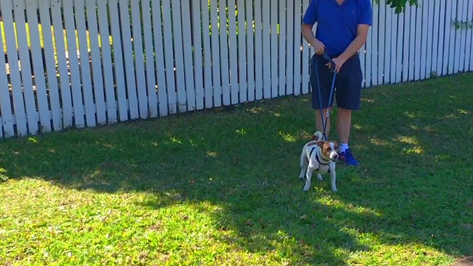 Dog Reactivity | Before and After