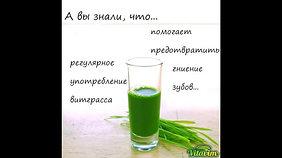 Сок пшеницы и хлорофилл