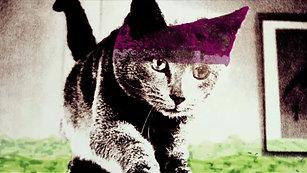 Cat Rip