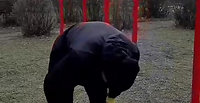 Комплекс фізичних вправ для 5-11 класів під час карантину