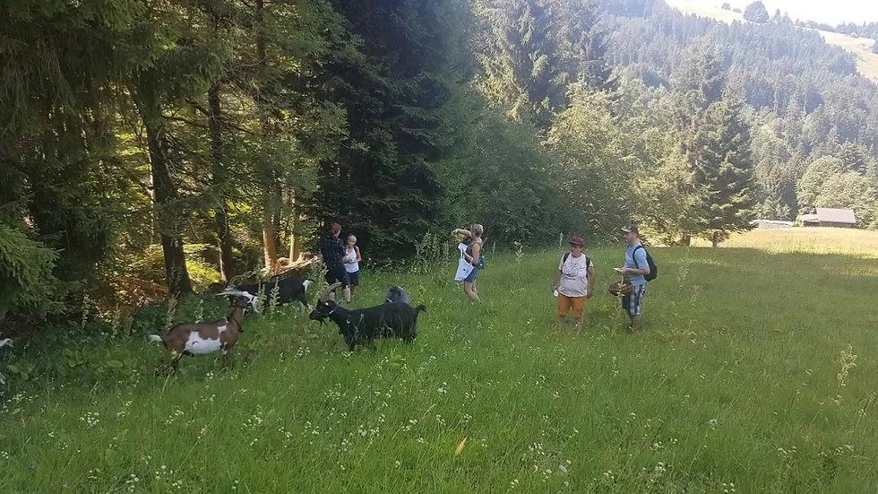 Kräuterwanderung bei Bocktour