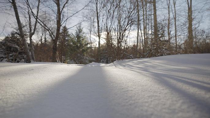 Sun Shining Through Trees on Snow 2