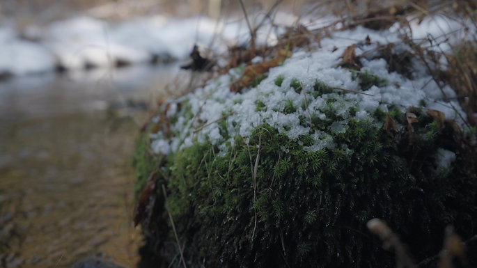 Snowy Moss by Stream River