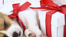 The Perfect Dog Gift