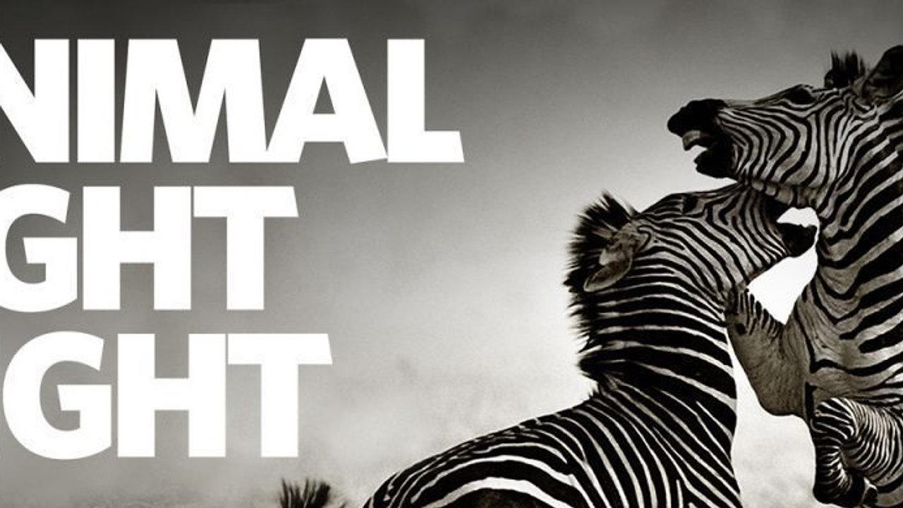 Animal Fight Night - Nat Geo