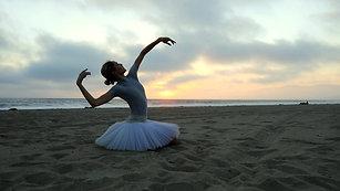 Beach Swan
