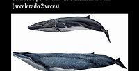 capsule6_sonidos_tipo_d_call_de_ballena