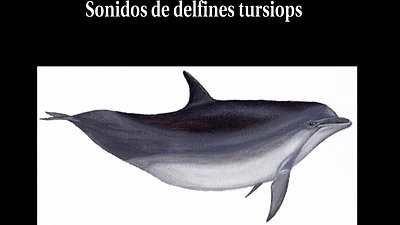 capsule2_sonidos_de_delfin_nariz_de_botella