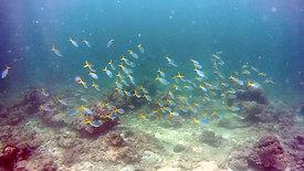 沙比島潛水 2018