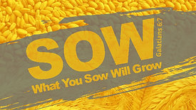 Sow! Sow! Sow! - September 22, 2019