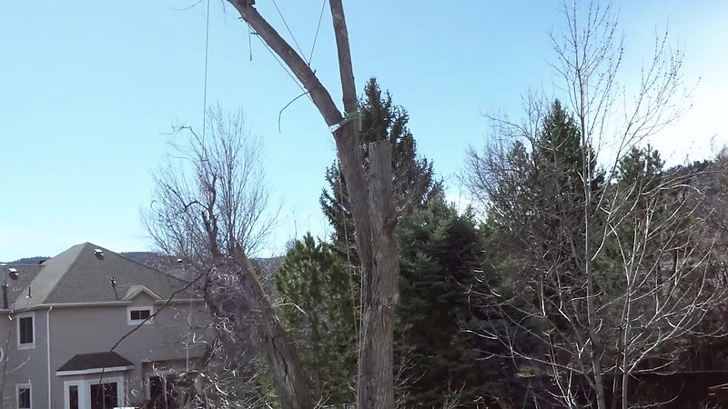 HeartWood Tree Care