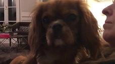 Lost Amber Dog 3