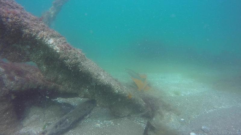 Dykning på Barken 2019