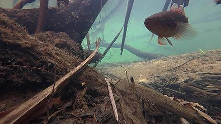 Underwater monitoring