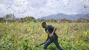East African Locusts - February 26, 2020