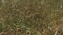 Rt 25, barley, thistles, dropped oats & tares
