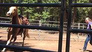 Holly, saddle 2- 6/24/18