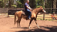Holly, learning to be a horse 2- 6/30/2019