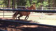 Holly, saddle 1- 6/24/18
