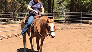 Holly, learning to be a horse 1- 6/30/2019