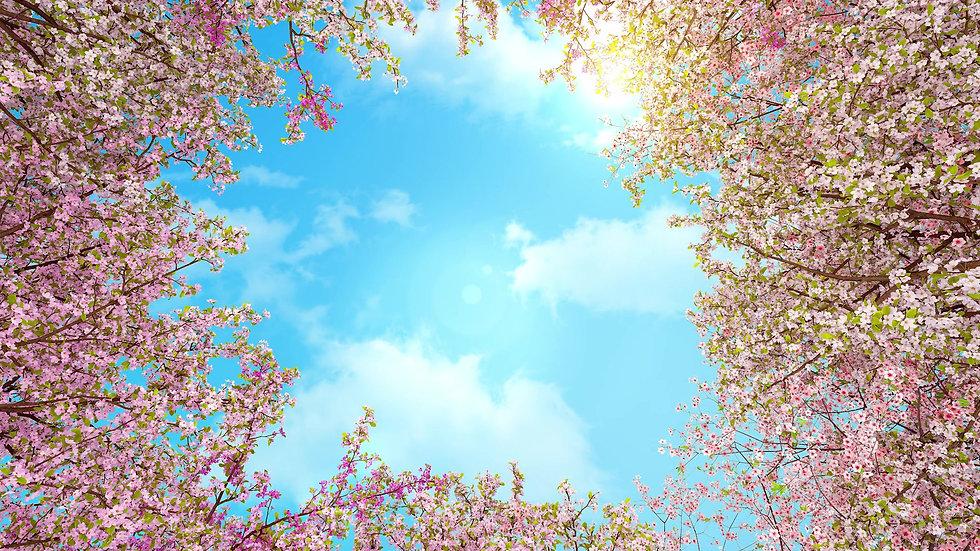 드림타워 디스플래이 벚꽃