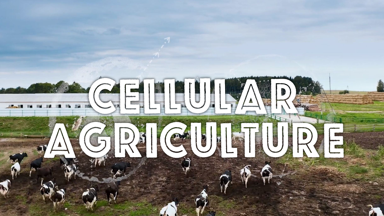 CELLULAR AGRICULTURE: WORKING WITH NEW HARVEST