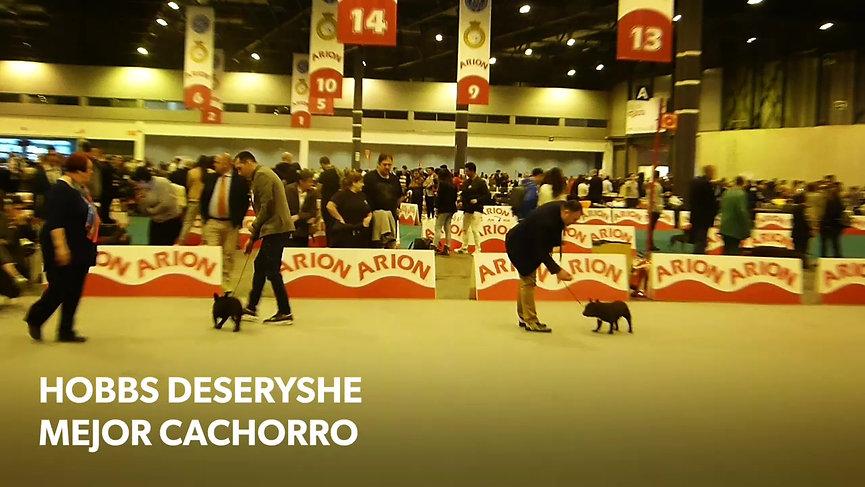 HOBBS DESERYSHE-90 EXPOSICIÓN PRIMAVERA MADRID 2018- MB1. MEJOR CACHORRO