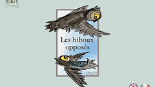 Opposite Owls story in French (1)