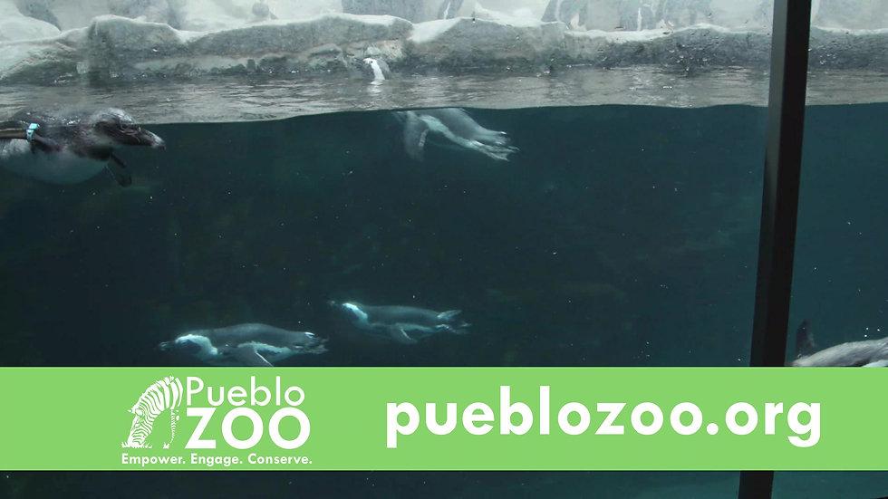 Pueblo Zoo V4