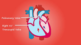 Heart - 4055