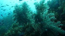 Diving in JEJU Korea