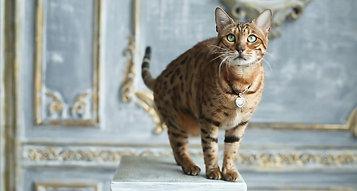 Rona Cat