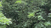 thunderstorm in the trees lake kegonsa