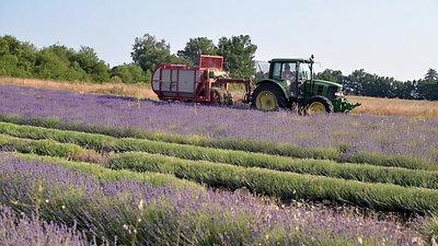 Les Bouquets du Ventoux - producteurs de Lavande AOP BIO
