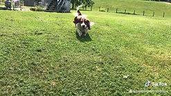 Lovin Life Happy Hound