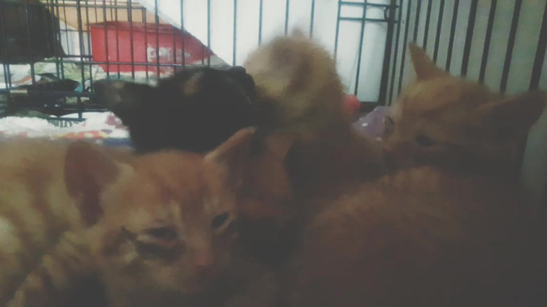 Kittens Are Very Sick