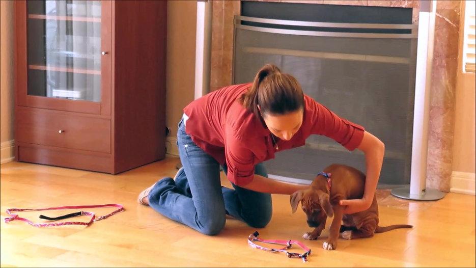 Puppy Instruction Manual Videos