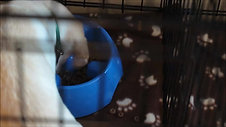 Crate Training: Feeding Your Puppy In The Crate