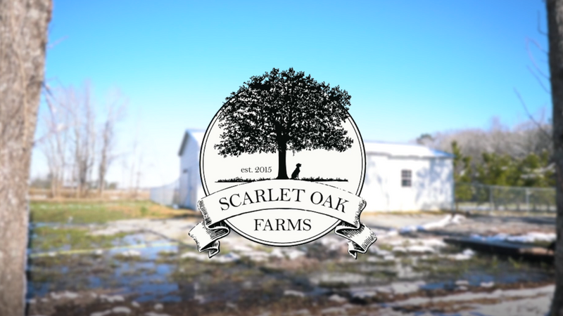Scarlet Oak Farms