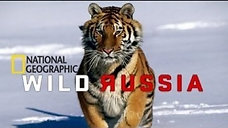Wild Russia - the Arctic