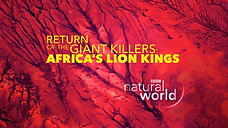 Return of the Giant Killers – Africa's Lion Kings