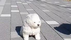 Cute Puppies in Wind