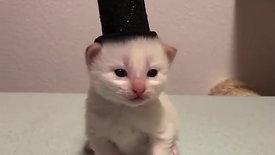 Kitten in Top Hat