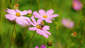 Collect pollen from flowers