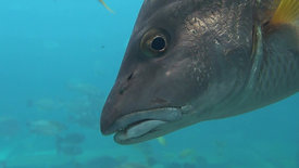Fish head drifting away