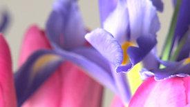 Bright purple rotating flower